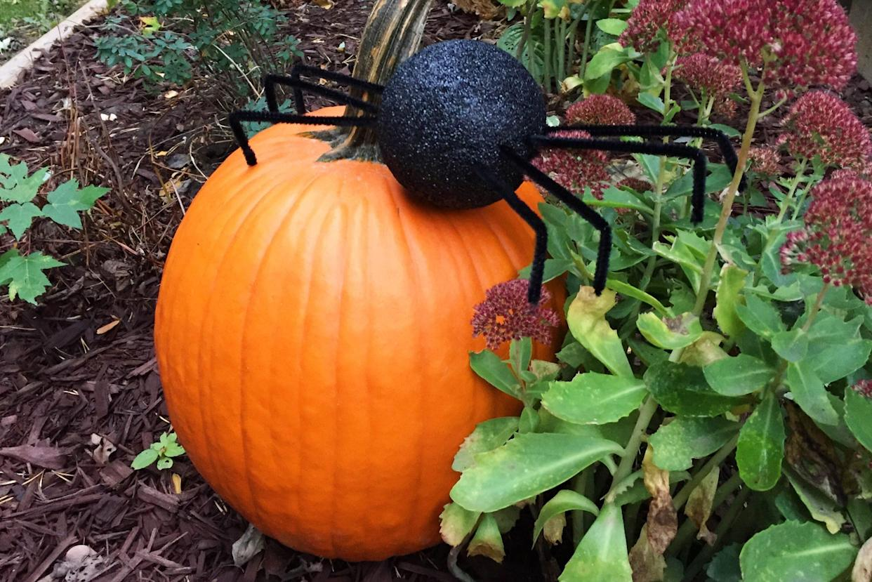 Giant spider in the yard crawling on a pumpkin