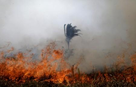 Tract of the Amazon jungle burns as it is cleared by loggers and farmers in Porto Velho