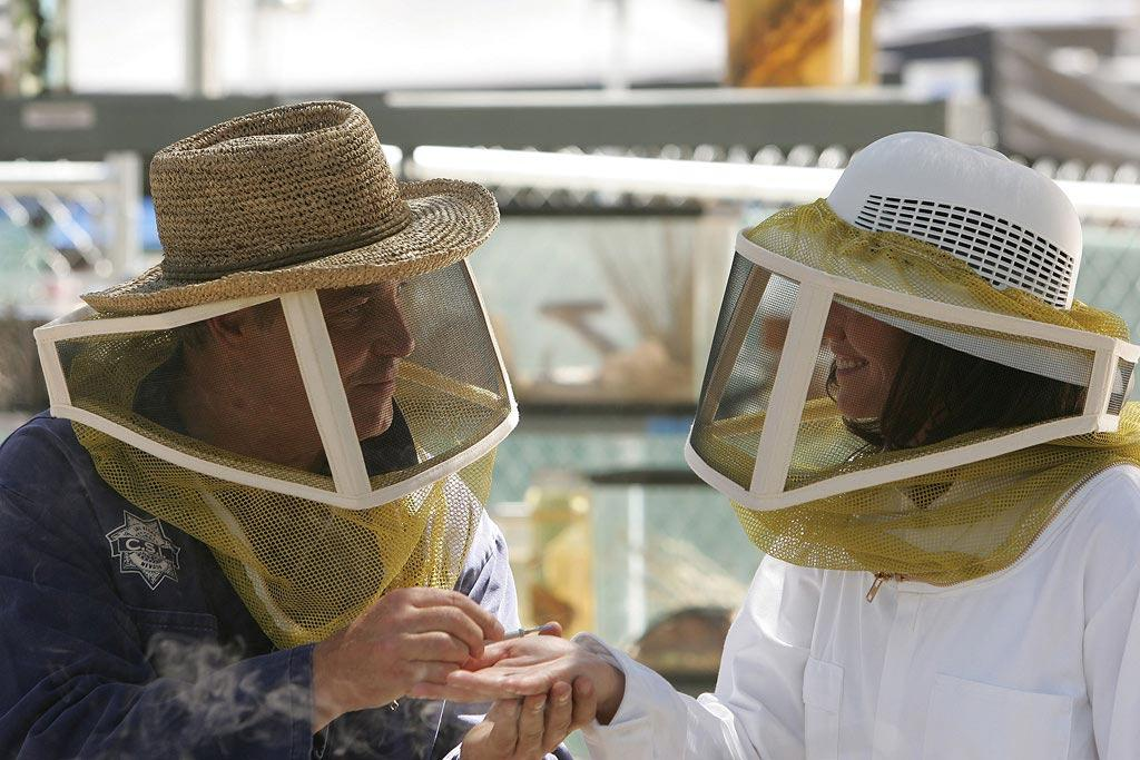 """Grissom proposes to Sara as they tend the bees that he recovered from a previous crime scene. (""""The Case of the Cross-Dressing Carp"""" 10/18/2007, Season 8)"""