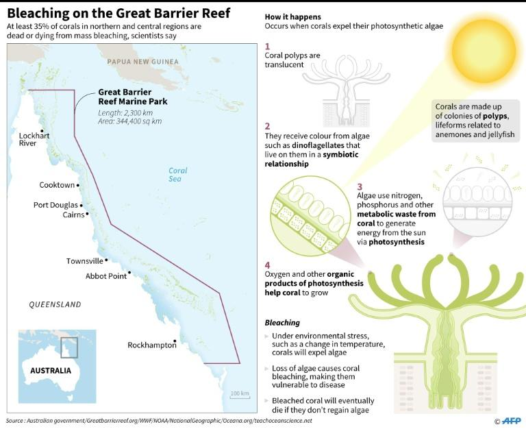 Graphic on bleaching in Australia's Great Barrier Reef