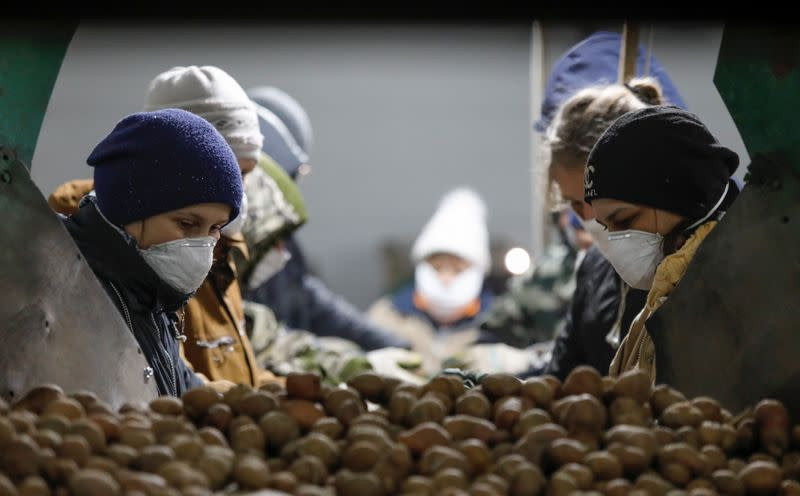 Employees wearing protective masks process potatoes in a vegetable storage in Vinsady