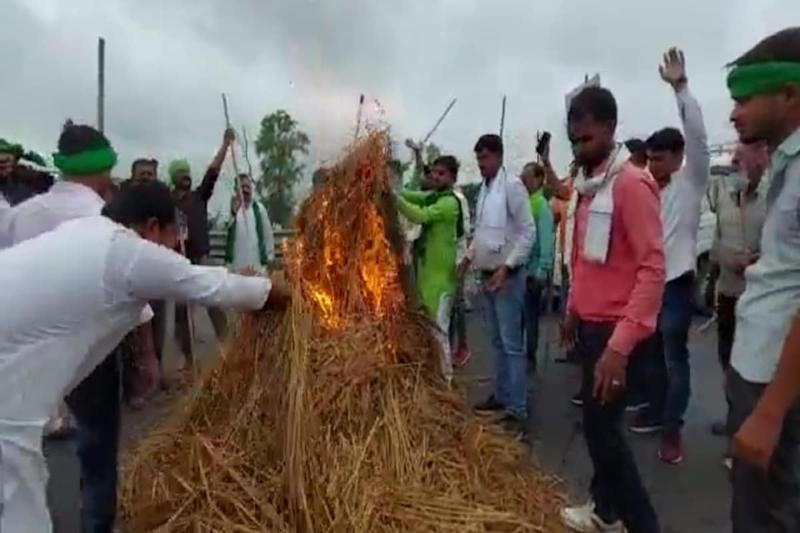 Cutting Across Party Lines, Farmers in Punjab & Haryana Protest against Farm Bills