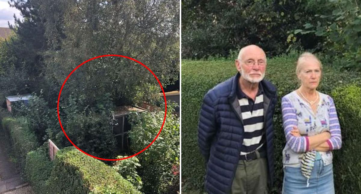 Detail in neighbour's home may cost man $40,000