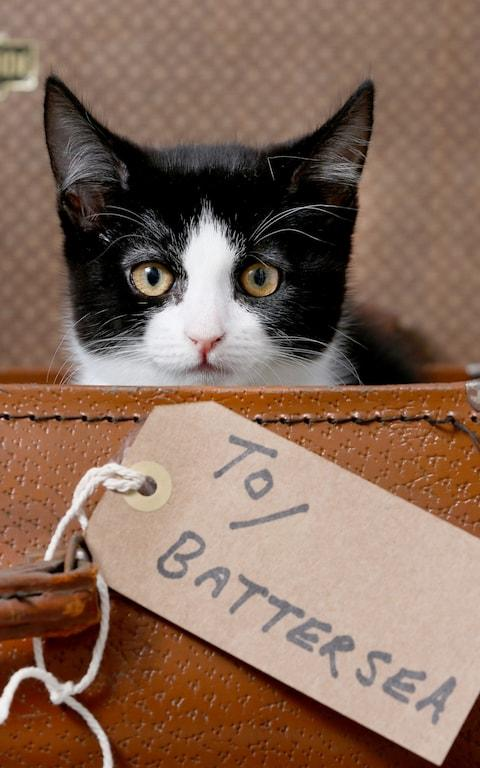 Gabbana, a kitten who is heading from Yorkshire to Battersea - Credit: Lorne Campbell/Guzelian