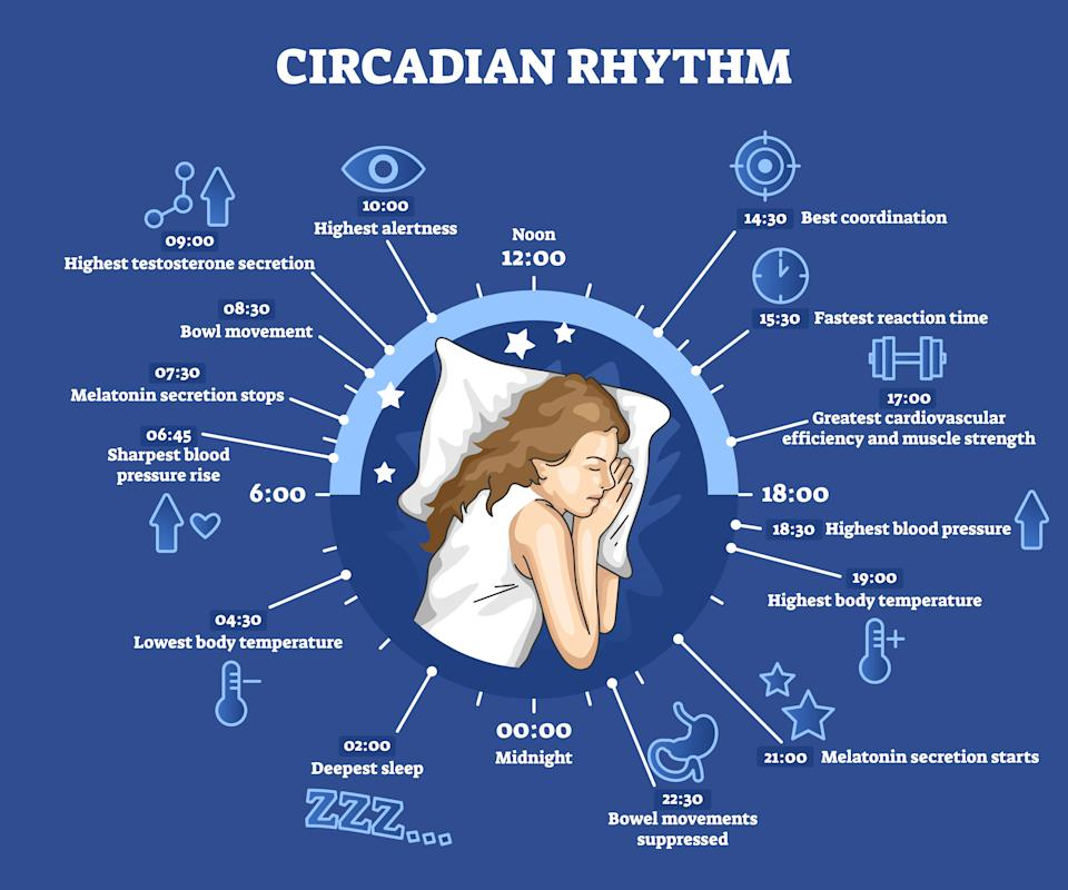 Circadian rhythm as educational natural cycle for healthy sleep and routine. Labeled biological clock rules explanation with day scheme for wellness vector illustration. Inner physical body schedule.