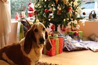 """<p> This adorable hound definitely did not want his picture taken. </p> <p><a href=""""http://media1.popsugar-assets.com/files/2020/12/21/842/n/1922507/237dde6f7a28d365_pexels-maximiliano-pinilla-754491/i/Download-Zoom-background-image-here.jpg"""" class=""""link rapid-noclick-resp"""" rel=""""nofollow noopener"""" target=""""_blank"""" data-ylk=""""slk:Download Zoom background image here."""">Download Zoom background image here.</a> </p>"""