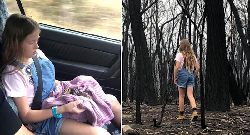 Echidna hit by car near NSW bushfire scene rescued by girl and her dad.