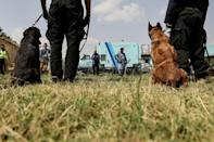 The United States has denied its military personnel abandoned dogs at Kabul airport (AFP/Karim SAHIB)