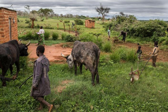 """<span class=""""caption"""">A family farm in Zambia. Disease in livestock is common, an easy way for pathogens to transfer from animals to people.</span> <span class=""""attribution""""><a class=""""link rapid-noclick-resp"""" href=""""https://www.gettyimages.com/detail/news-photo/general-view-from-the-farm-owned-by-linah-and-godfrey-news-photo/1200189322?adppopup=true"""" rel=""""nofollow noopener"""" target=""""_blank"""" data-ylk=""""slk:Getty Images / Guillem Sartorio / AFP"""">Getty Images / Guillem Sartorio / AFP</a></span>"""