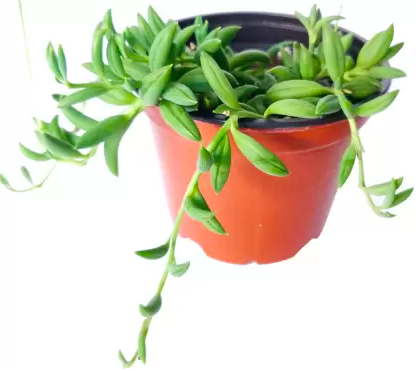 15 indoor plants to infuse natural greens into your home decor