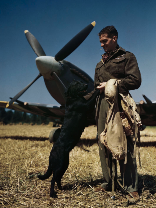 <p>RAF Fighter Pilot James 'Johnny' Johnson relaxes with pet Labrador Sally in Normandy, 1944. </p>