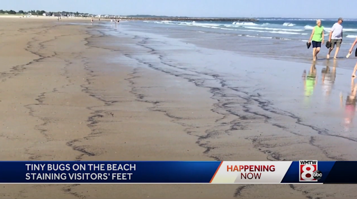 Beach was littered with unknown substance which turned out to be dead bugs ( YouTube/WMTW-TV)