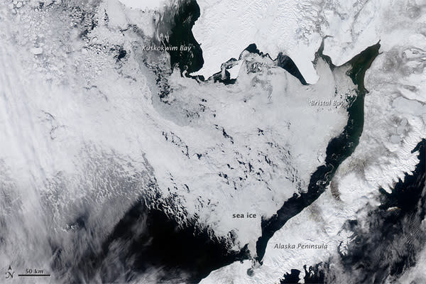 Bering Sea Sees Surprising Record Ice Cover