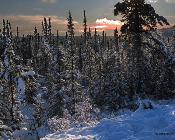 View of the northern boreal forests of Ontario, Canada.