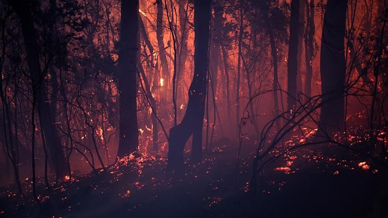 More than 80 fires are burning around New South Wales, and more than half are out of control