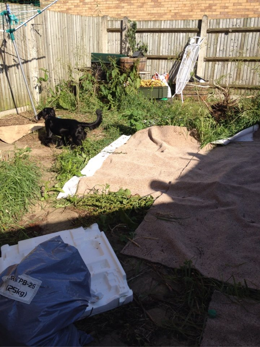<p>Taking the 10th spot in the competition is this garden renovation project from Sharon in Northampton.</p><p>'The garden was overgrown and becoming like the local tip,' says Sharon. 'I was desperate for some flowers and to stop the mud from being brought in by the dogs when it rained.'</p>