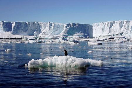 An Adelie penguin stands atop a block of melting ice near the French station at Dumont díUrville in East Antarctica January 23, 2010. REUTERS/Pauline Askin/File photo