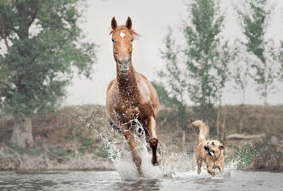Nothing like splashing in the water with your best friend on a warm day.