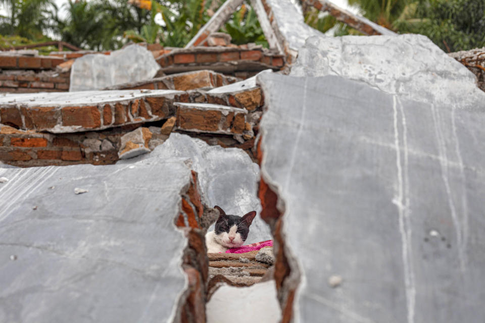 A cat is seen through the rubble of a house badly badly damaged by earthquake in Mamuju, West Sulawesi, Indonesia, Tuesday, Jan. 19, 2021. Aid was reaching the thousands of people left homeless and struggling after an earthquake that killed a number of people struck early Friday. (AP Photo/Yusuf Wahil)