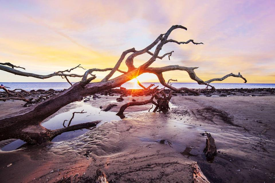 """<p>Serving as a barrier to mainland Georgia, <a href=""""https://www.goldenisles.com/listing/driftwood-beach/148/"""" rel=""""nofollow noopener"""" target=""""_blank"""" data-ylk=""""slk:Driftwood Beach"""" class=""""link rapid-noclick-resp"""">Driftwood Beach</a> bears the brunt of harsh Atlantic Ocean storms and it shows. With weathered driftwood and native trees mangled by erosion strewn about the sand, this beach is a haven for wildlife and spectacular sunsets.</p>"""