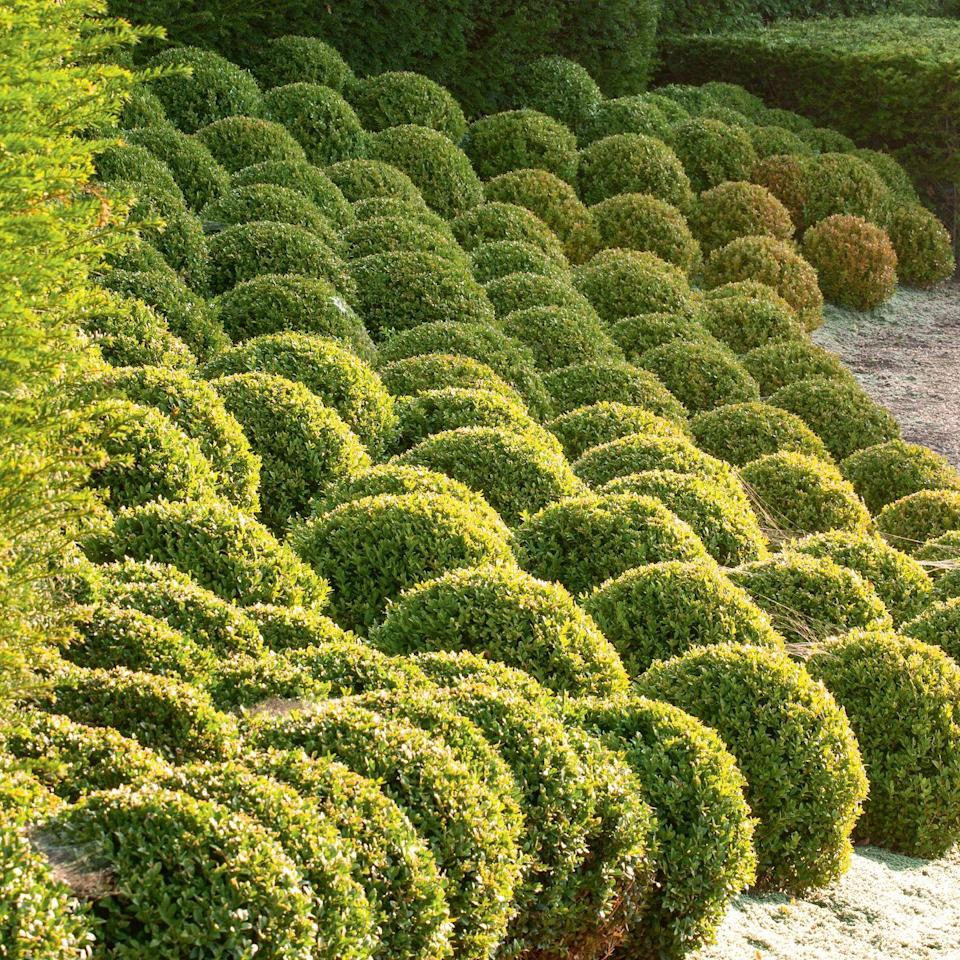 Photo credit: Glorious Gardens, by Country Living| CLIVE NICHOLS