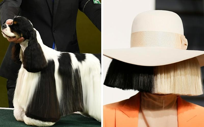 Miami the dog and Sia - Credit: Justin Tallis / Danny Moloshok/AFP / REUTERS