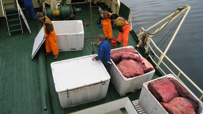 The Norwegian government has made it easier for new whaling ships to launch