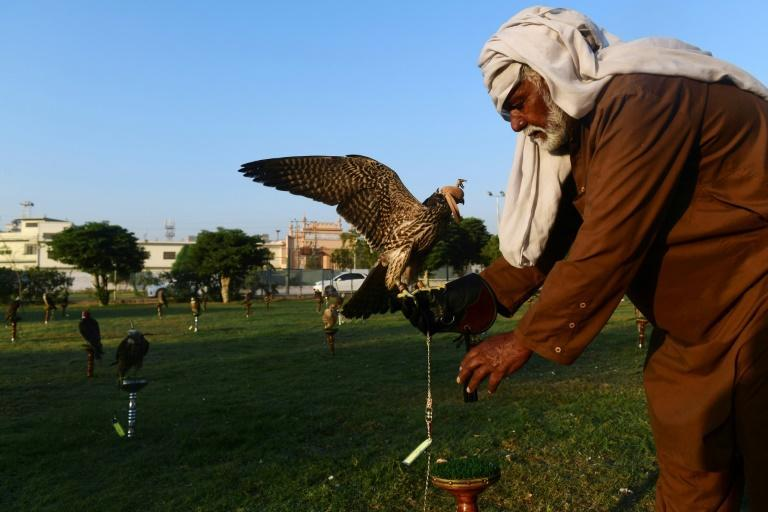 Pakistani conservationists say the country needs some kind of sustainable wildlife programme -- some have suggested regulating the falcon trapping market