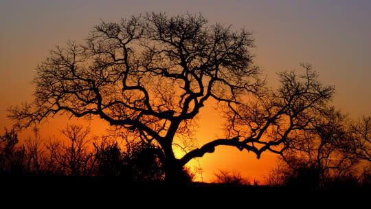 "<p>Sunsets are always fascinating — moreso than sunrises probably because of our love for sleep. This particular one in Kruger National Park, South Africa is special because we got a setting right out of our bucket list: a solitary dead tree all branched out with the sun setting right behind it, giving off a fascinating orange-ish glow and creating a brilliant silhouette. That it was taken from a moving (albeit slowly) jeep makes it all the more special. <i>—Rishabh Shah, <a href=""http://gypsycouple.com/"" rel=""nofollow noopener"" target=""_blank"" data-ylk=""slk:Gypsy Couple"" class=""link rapid-noclick-resp"">Gypsy Couple</a></i><br><br></p>"