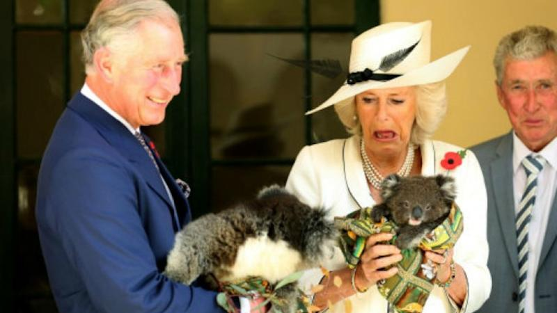 Camilla got cosy with a koala during a visit Down Under in 2015. Photo: Getty