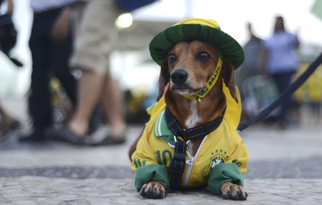 A dog dressed in the colours of Brazil sits at Copacabana beach during a broadcast of the World Cup soccer match between Brazil and Cameroon in Brasilia, in Rio de Janeiro June 23, 2014. REUTERS/Lucas Landau (BRAZIL - Tags: SPORT SOCCER WORLD CUP)