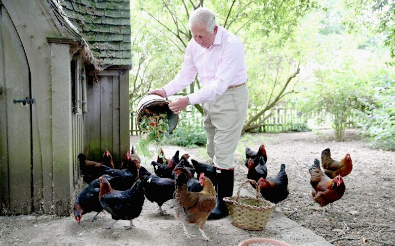 Prince Charles feeds his chickens at Highgrove - Getty Images Europe