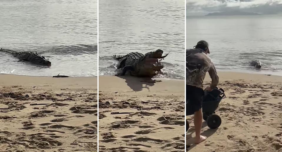 A giant crocodile snaps up a fisherman's catch on Cardwell Beach in North Queensland