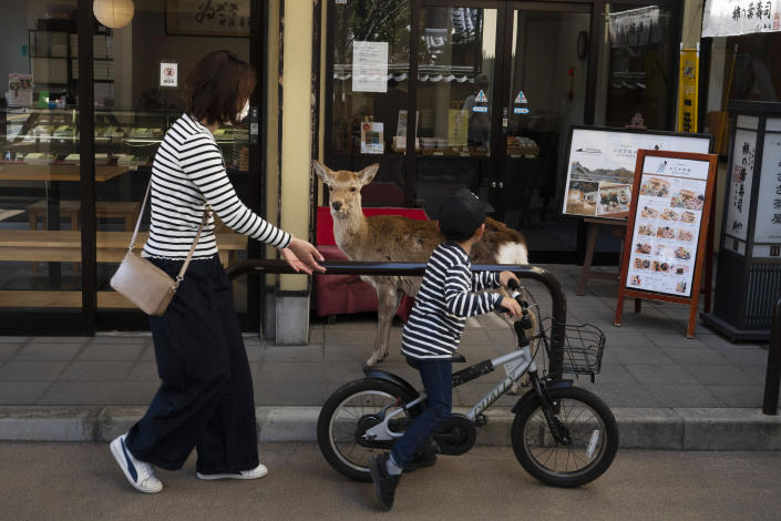 A young boy rides his bike past a deer wandering around the shopping area in Nara, Japan. (AP)