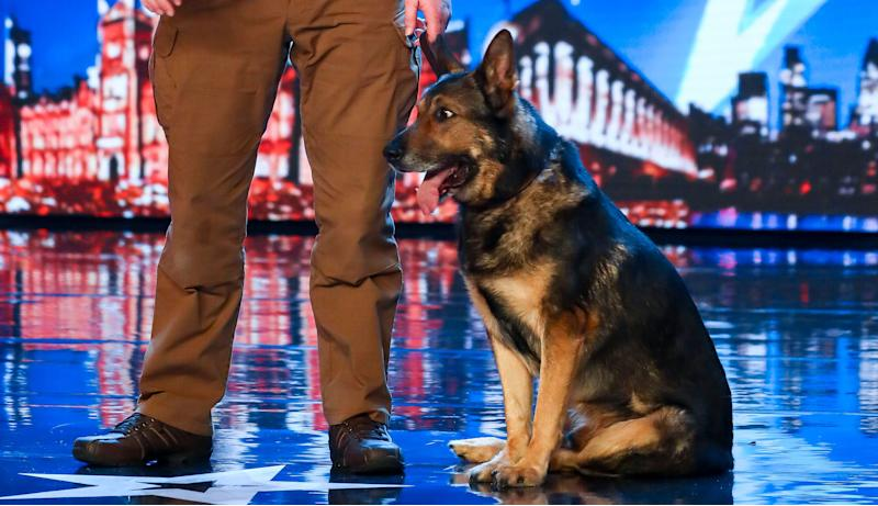 'Britains Got Talent' 2019 finalists Dave and Finn are a police dog magic act (Credit: Syco/Thames)