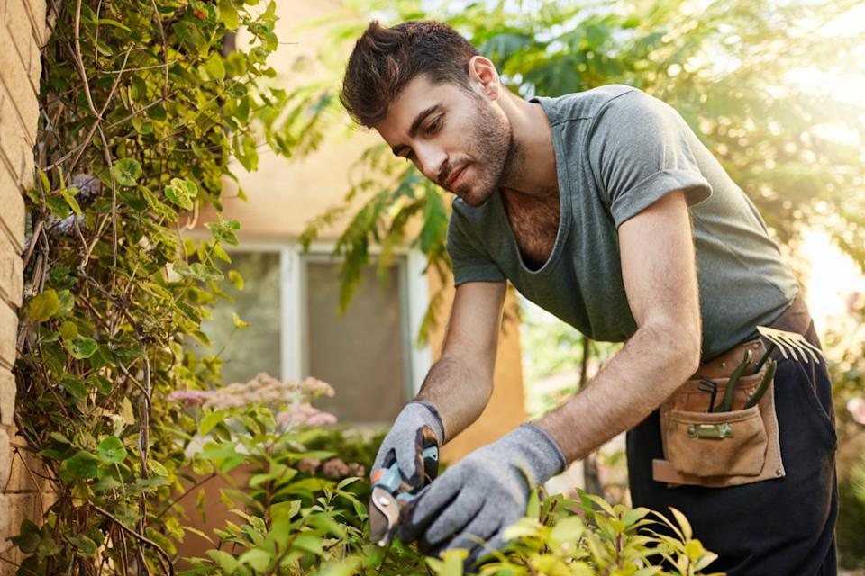 young man trimming plants in his backyard