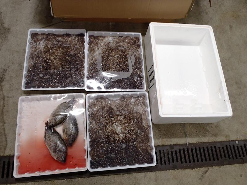 Boxes containing eels and other fish. (PA Images/NCA)
