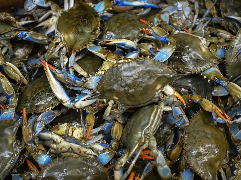 The owner of a popular group of restaurants and crab houses has filed a lawsuit against Baltimore County after protests at one of the locations prompted a temporary shutdown.