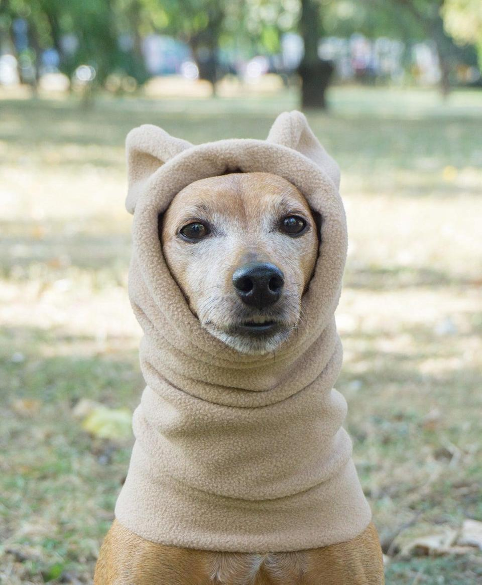 """<h2><a href=""""https://www.etsy.com/listing/502781419/winter-dog-snood-with-ears-fleece-dog"""" rel=""""nofollow noopener"""" target=""""_blank"""" data-ylk=""""slk:Etsy Winter Dog Snood"""" class=""""link rapid-noclick-resp"""">Etsy Winter Dog Snood</a><br></h2><br>This fleece dog snood — a snood is basically a fancy <a href=""""https://www.refinery29.com/en-us/scarves"""" rel=""""nofollow noopener"""" target=""""_blank"""" data-ylk=""""slk:scarf"""" class=""""link rapid-noclick-resp"""">scarf</a> — is made-to-order and comes in a variety of colors. <br><br><strong>Etsy, Etsy Seller</strong> Winter Dog Snood, $, available at <a href=""""https://go.skimresources.com/?id=30283X879131&url=https%3A%2F%2Fwww.etsy.com%2Flisting%2F502781419%2Fwinter-dog-snood-with-ears-fleece-dog"""" rel=""""nofollow noopener"""" target=""""_blank"""" data-ylk=""""slk:Etsy"""" class=""""link rapid-noclick-resp"""">Etsy</a>"""