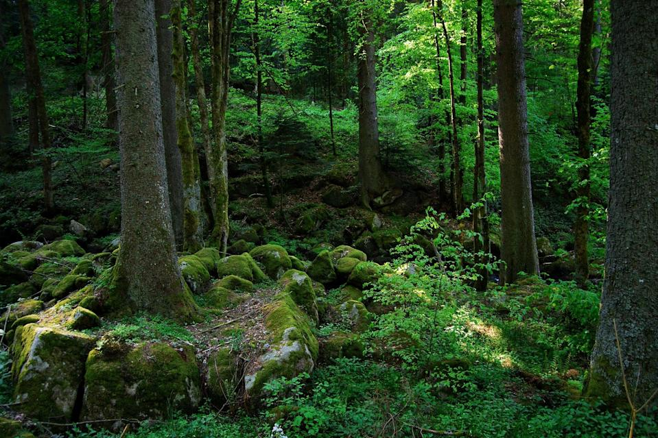 """<p>If Germany's Black Forest looks like something out of a fairy tale, that's no coincidence. The Brothers Grimm set many of their stories - including """"Little Red Riding Hood"""" - in the dark depths of the evergreen region.</p>"""