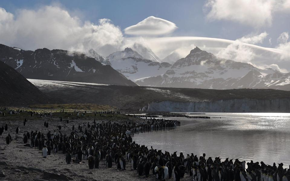 King penguins and glaciers in South Sandwich - PA