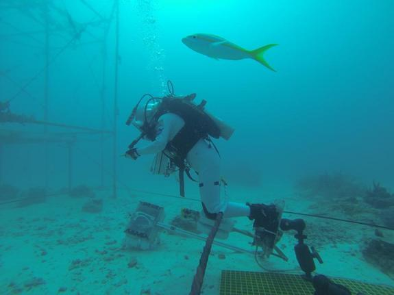 'Good to be back in weightlessness,' wrote JAXA astronaut Soichi Noguchi on Twitter concerning this scuba dive at the Aquarius underwater laboratory. Noguchi was on the SEATEST crew that worked in the lab in September 2013.