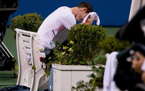 <span>Andy Murray cried in pain after beating Copil in Washington last year </span> <span>Credit: AP </span>