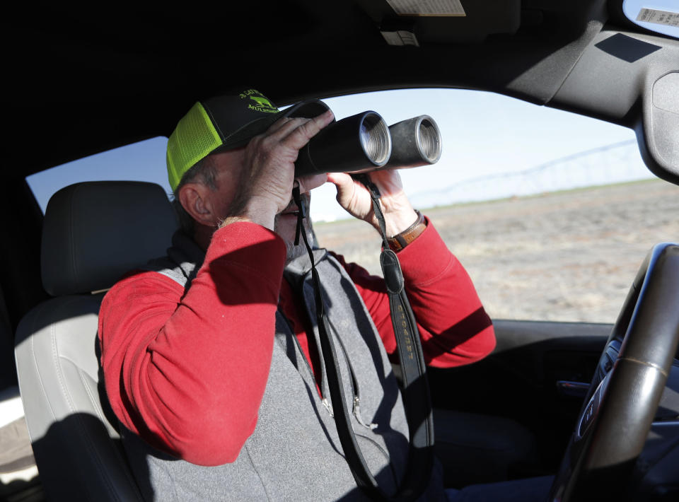Tim Black uses binoculars to check out a newborn calf on his Muleshoe, Texas, farm on Monday, April 19, 2021. The longtime corn farmer now raises cattle and plants some of his pasture in wheat and native grasses because the Ogallala Aquifer, used to irrigate crops, is drying up. (AP Photo/Mark Rogers)