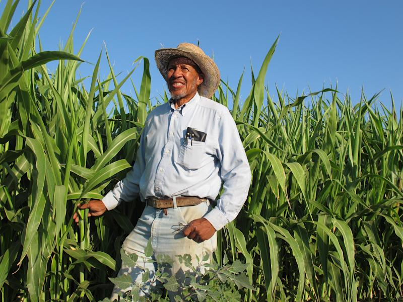 In this photo taken Sept. 15, 2011, Will Scott, president of the African American Farmers of  California, poses for a photo by the sorghum plants at the group's demonstration farm in Fresno, Calif. on Thursday, September 15, 2011. The number of black farmers has been in a long decline nationally, and in California, about 400 farms are still owned by African Americans.  (AP Photo/GosiaWozniacka)