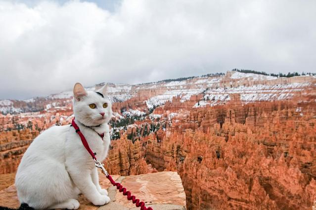 <p>Big cat eyes at Bryce Canyon National Park, a sprawling reserve in southern Utah is known for crimson-colored hoodoos, which are spire-shaped rock formations. (Photo: Our Vie / Caters News) </p>