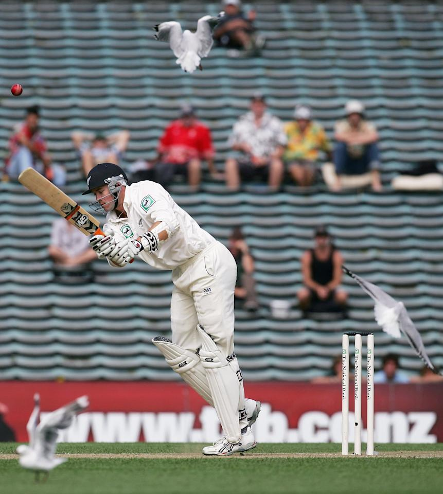 AUCKLAND, NEW ZEALAND - MARCH 10: Peter Fulton of New Zealand disturbs some seagulls as he bats during day two of the first test match between New Zealand and the West Indies at Eden Park March 10, 2006 in Auckland, New Zealand.  (Photo by Phil Walter/Getty Images)