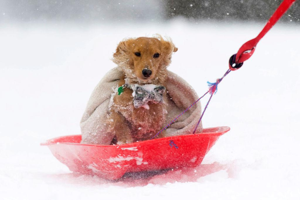 <p>Walton the dog gets a lift on a sledge in the Abbeyhill area of Edinburgh, United Kingdom. People have been warned not to make unnecessary journeys as the Met office issues a red weather be aware warning for parts of Wales and South West England following the one currently in place in Scotland. (Matthew Horwood/Getty Images) </p>