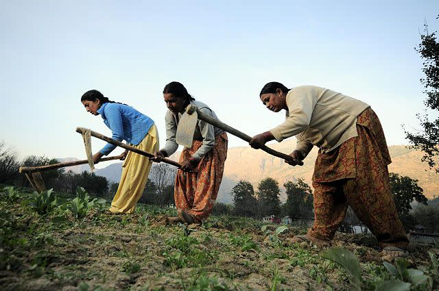 A majority of women work in agriculture or in other labour-intensive sectors in the country. Image credit: By CIAT - NP Himachal Pradesh 68Uploaded by mrjohncummings, CC BY-SA 2.0, https://commons.wikimedia.org/w/index.php?curid=30330009