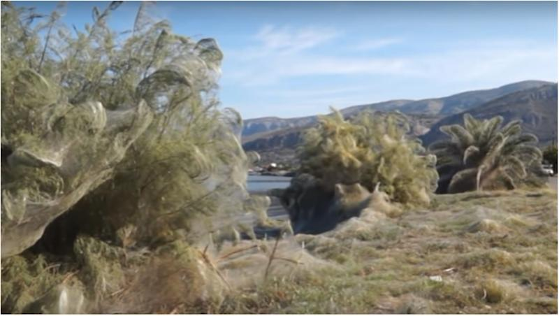 Huge spider web covers 1,000ft of land